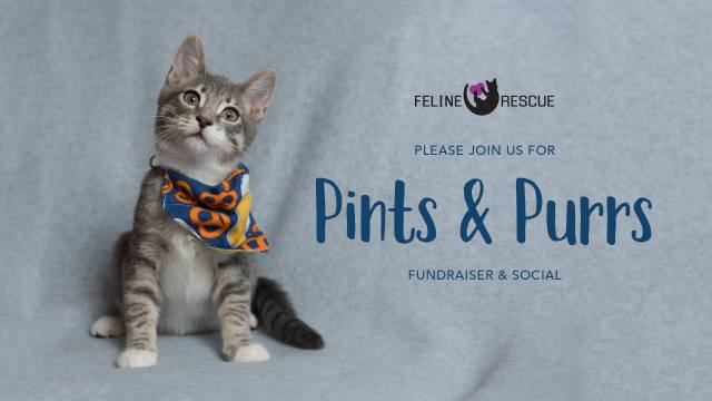Pints and Purrs 2018